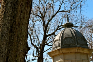 Cupola With Trees