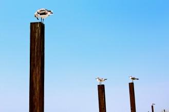 Four Seagulls