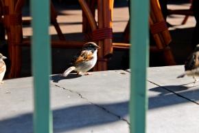 Las Vegas Bird